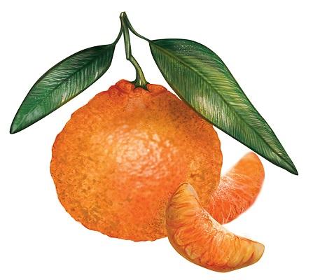 Chios Mandarin